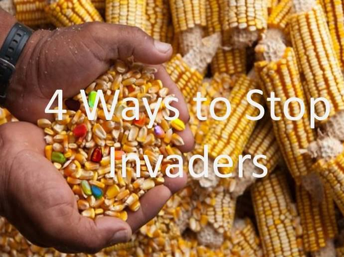 Part 2 - 4 Ways to Stop Invaders in Your Body