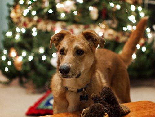Pet Safety Tips for the Holidays - PetMD
