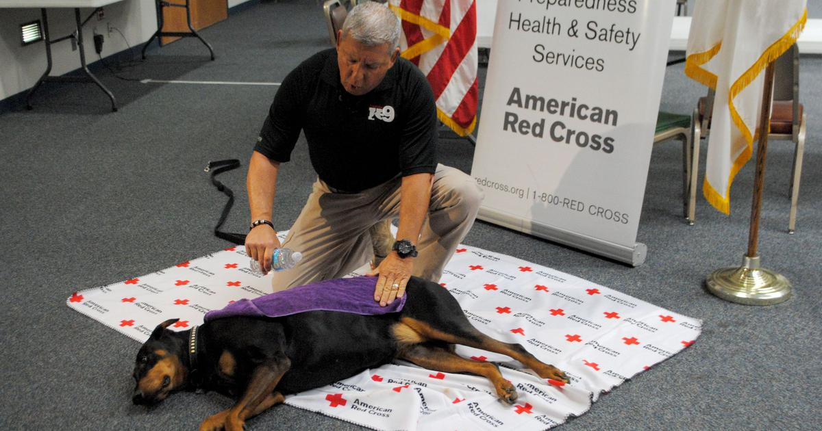 April is American Red Cross's Pet First Aid Awareness Month