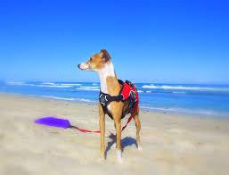 Pet Friendly Activities & Restaurants in Vero Beach, FL