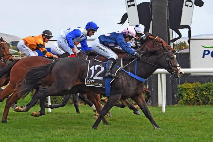 First NZ winner for Wrote