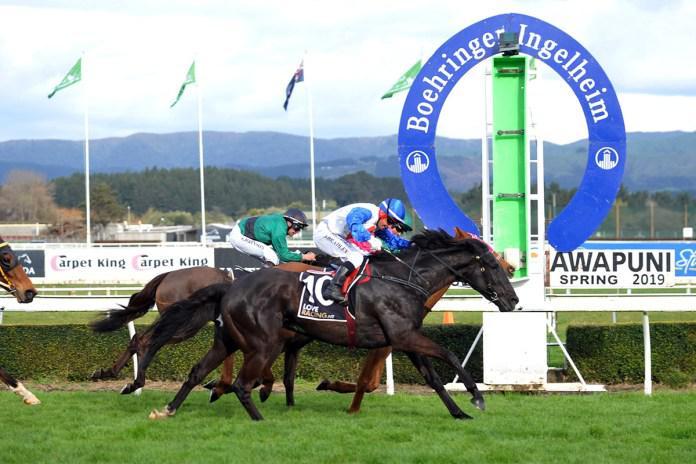 Herengawe makes New Zealand return