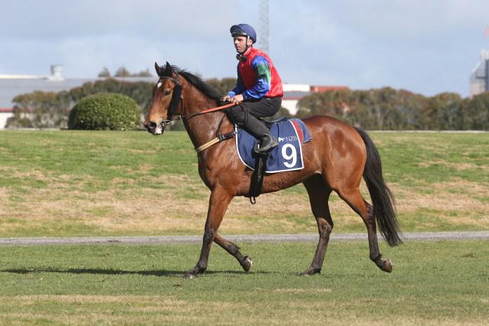 Big spring tipped for Team Rogerson