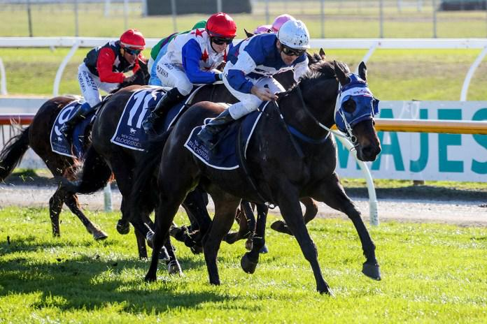 NZB Ready to Run Sale Trainer Series to Resume