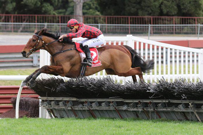 Tallyho Twinkletoe pleasing ahead of jumps return