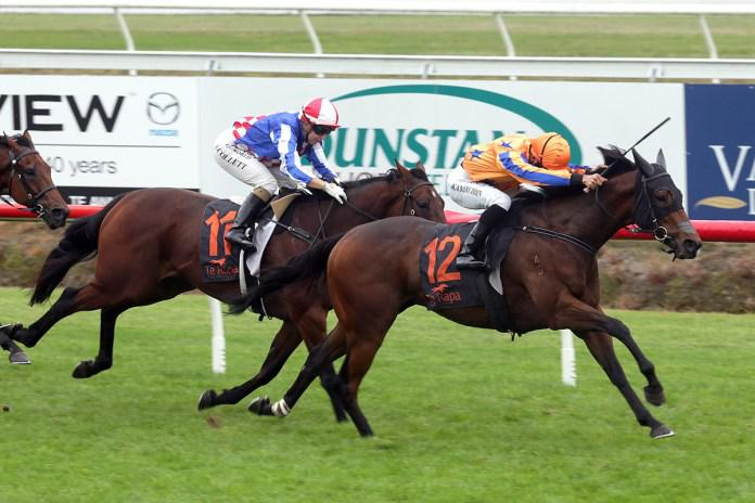 Promising apprentice guides Top Brass to victory at Te Rapa