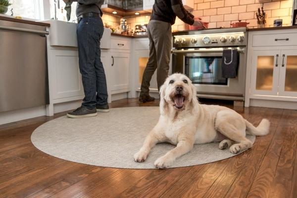 Thanksgiving Dinner for our Pets?