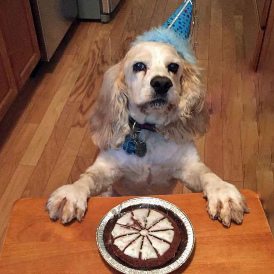 Lazy Dog Happy Birthday Pie Cake