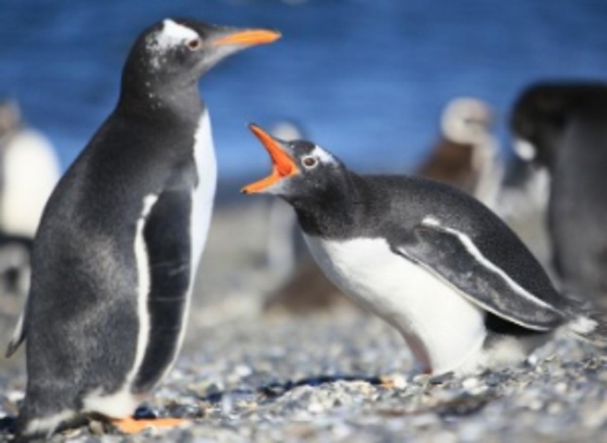 Google Penguin 3.0 Wrap-up