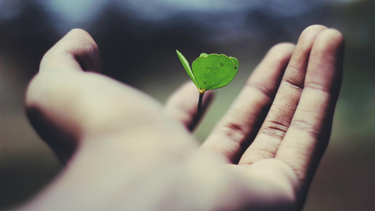 Stewardship of Life