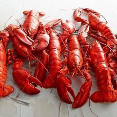 Live Lobster Delivered