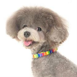 rainbow striped fabric dog collar