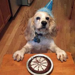 lazy dog happy birthday dog pie cake