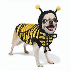 Pampet bee dog costume for Halloween