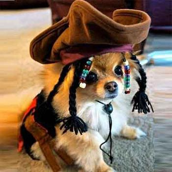 Captain Jack Sparrow pirate Dog Costume