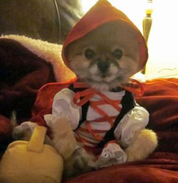 Lill Red Ridin Hood Comes with a detachable red cape and basket toy with a squeaker  Dog costume
