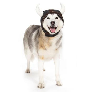 dog viking hat