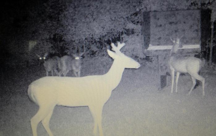 Wilderness Calls | Deer Feeders, Wild Hog Traps - Gravity